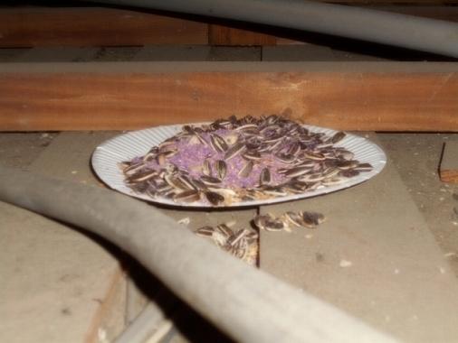 アパート ねずみ 駆除 天井 管理 賃貸 自分だけで駆除してみるのは駄目だろうか