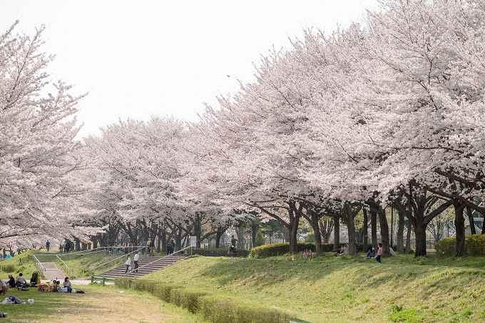 アパート 名前 和風 桜